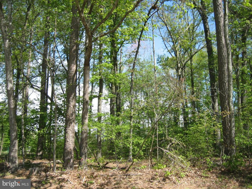 5/20 Wooded lot with water availability.  Close to the entrance, while at the same time, just a short distance to all the amenities.  Buy now and build later, take advantage of this great buy!  No time frame to build, just enjoy all the amenities and the lifestyle on the Eastern Shore of VA.  Captains Cove is the Eastern Shore of Virginias fastest growing Golf & Waterfront community; close to Chincoteague Island, Wallops Island and Ocean City MD.  HOA dues included FREE golf, indoor/outdoor pools (2), fitness center, basketball & tennis courts, boat ramp, docks, playground, security and so much more.