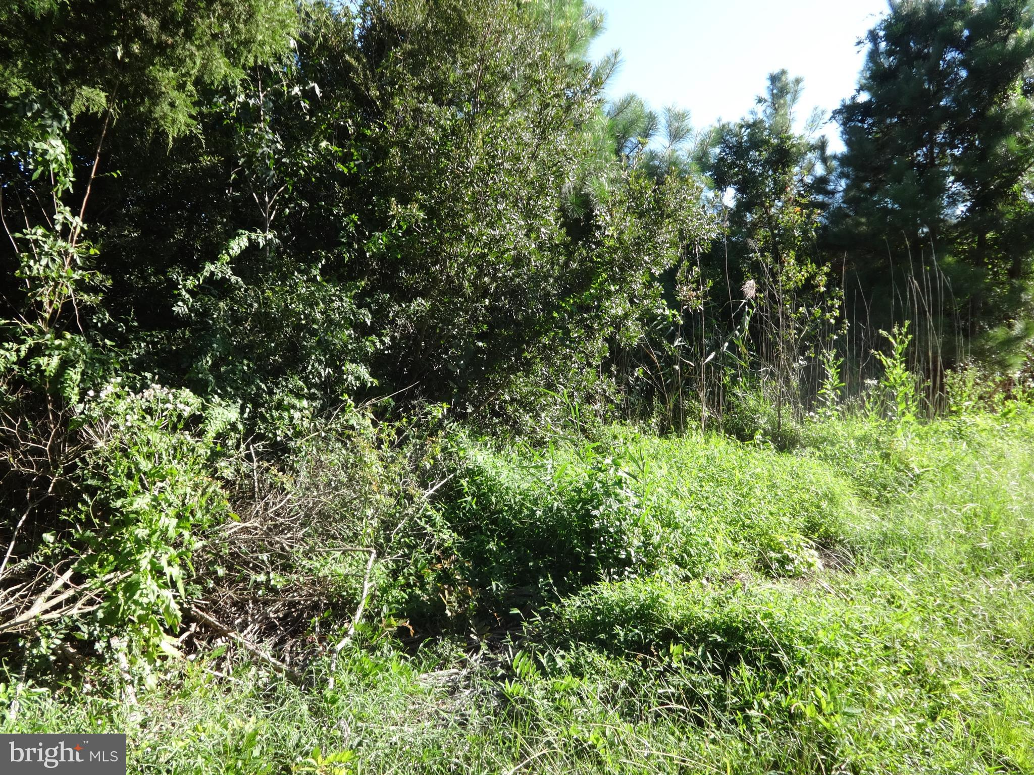 Seller Financing Available! 0.5 acres in the Lower Hill area.