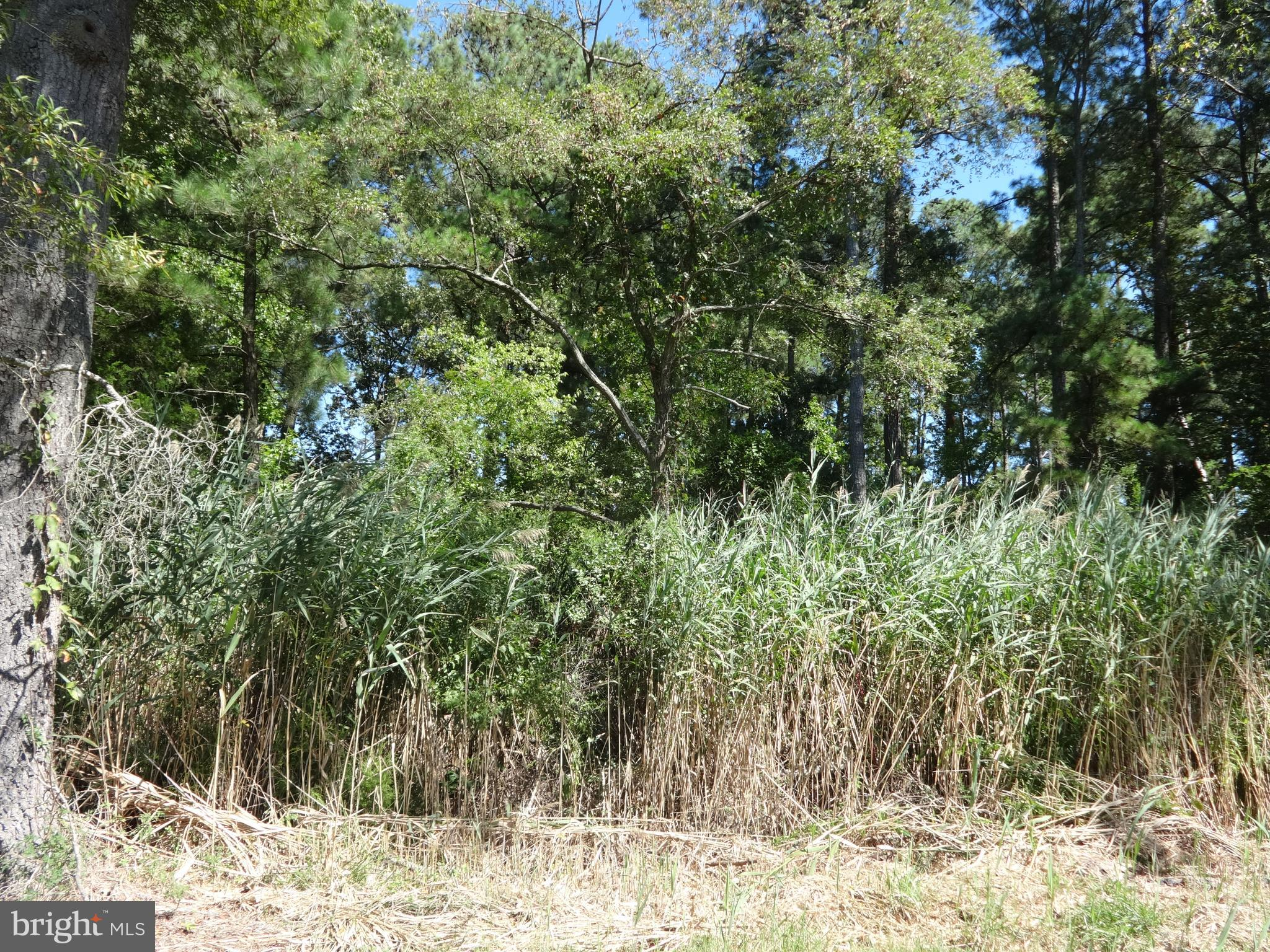 Seller Financing Available! 0.42 acre lot in the Crisfield Area off private lane.