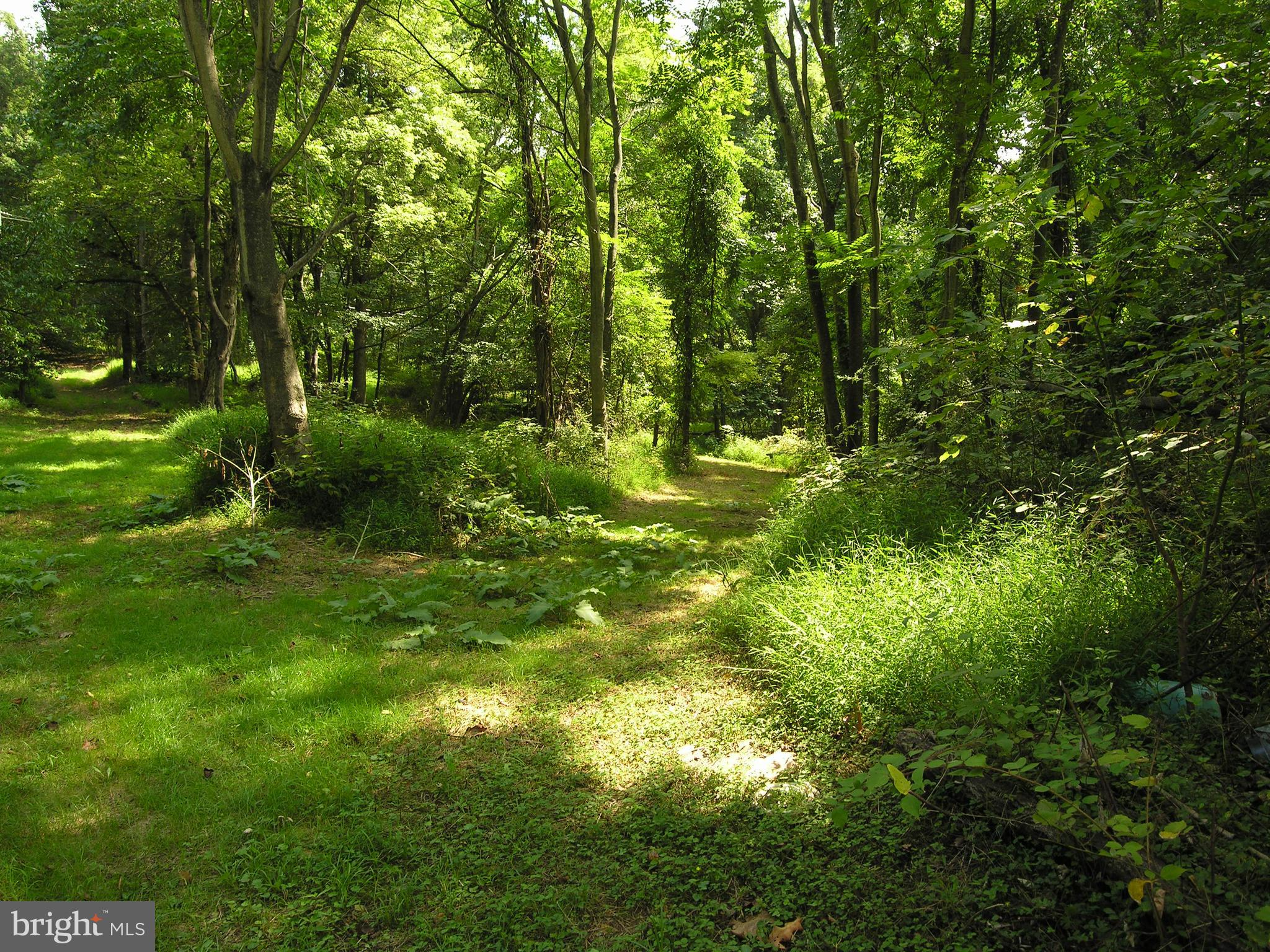 Totally wooded property at the end of the road backing to the more woods. Secluded, private, just 1 mile off Route 7. West of Loudoun County line, east of Shenandoah River.  Lower taxes and commuting convenience.  Foundation/basement present but delapidated.