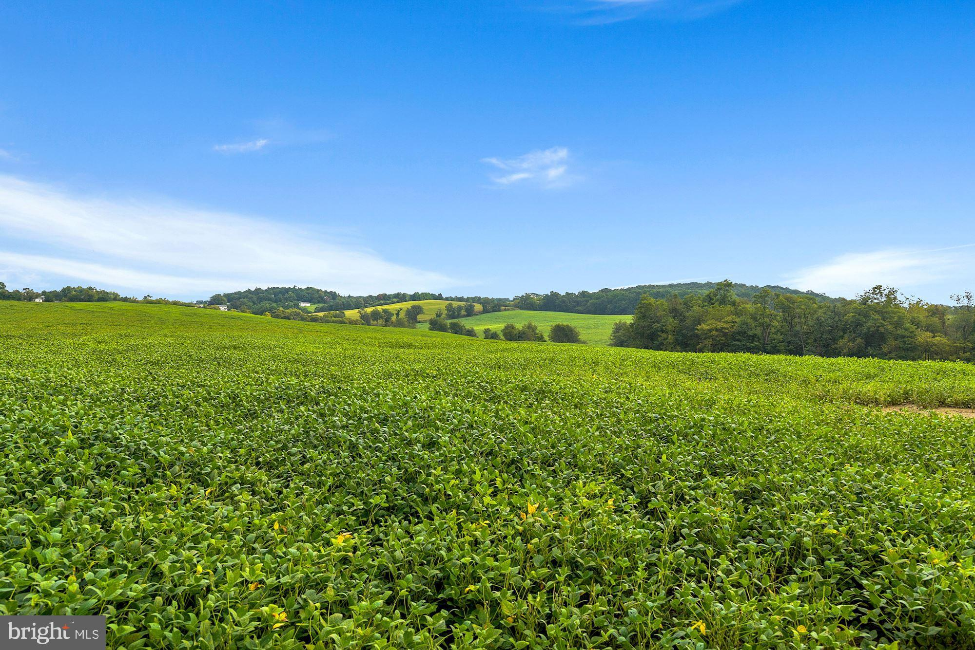 Welcome to this gorgeous and well kept farm in New Windsor!  Nearly 150 acres awaits you, with aroun