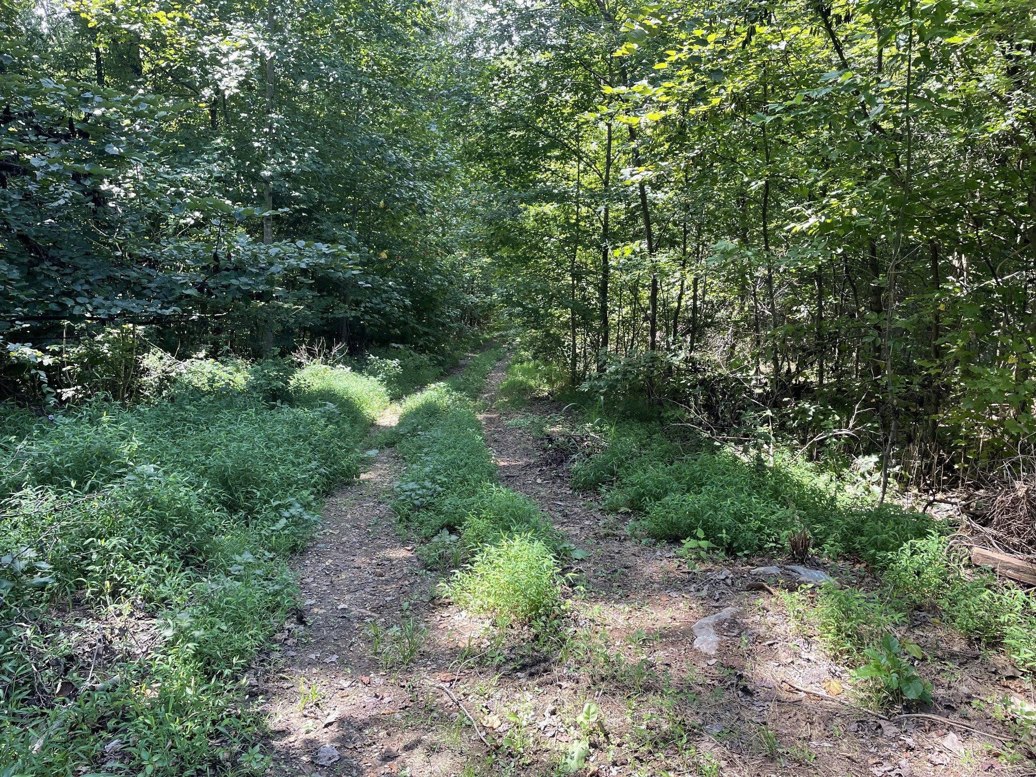 50 ACRES ZONED AG IN THE CITY. PART OF THE CITY'S OPPORTUNITY ZONE WITH POTENTIAL TAX ADVANTAGES. NO OTHER CURRENT RESTRICTIONS. 2 SEPARATE ACCESS POINTS OFF OVERTON DRIVE.