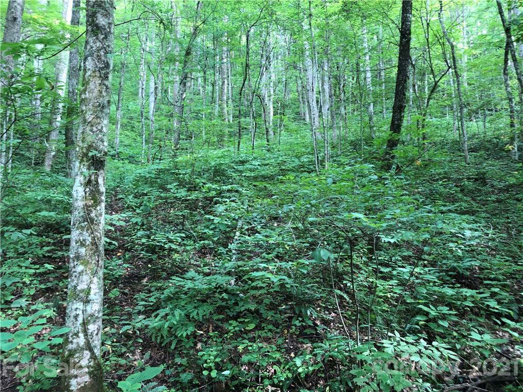 Come and build your own private retreat! NO RESTRICTIONS! Location is 20 minutes to Asheville. Tucked away down a gravel drive and lot will offer lots of privacy as it is wooded. There is a small stream that runs parallel to the road. There is a spring on this lot as well. No perc test has been completed.